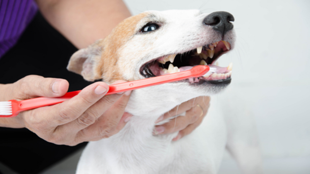 dog dental hygiene tips from fix machine animal health clinic in kennewick washington